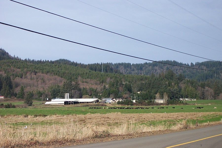 A dairy herd near Cloverdale, Oregon.