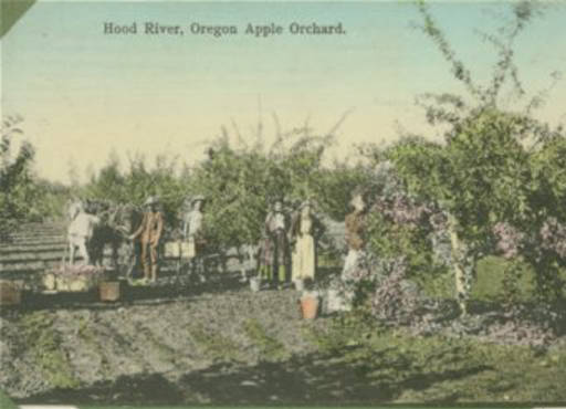 Hood river oregon is famous for its apples and its wind for Hood river fishing