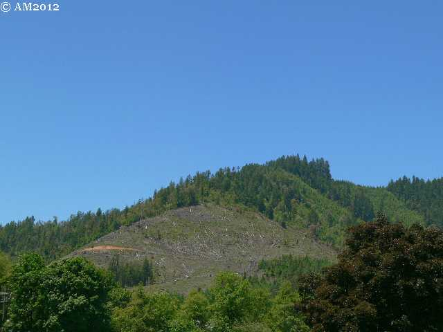 A view of a logging clear cut near Glendale, Oregon.