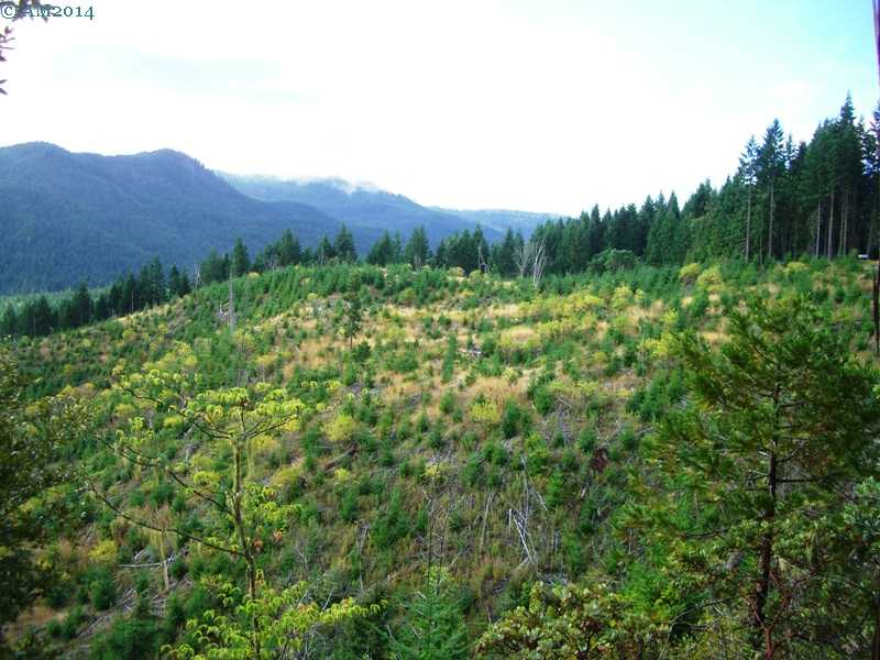 Forest reproduction area near Prospect, Oregon.